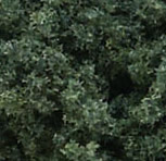 Dark Clump Foliage