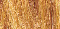 Harvest Gold Field Grass
