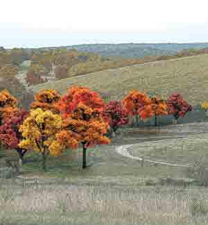 "3/4""-2"" Fall Deciduous Trees (38)"