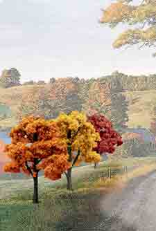 "3""-5"" Fall Deciduous Trees (14)"